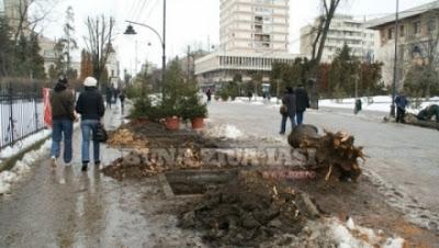 defrisari copaci_taiati_strada_stefan_cel_mare