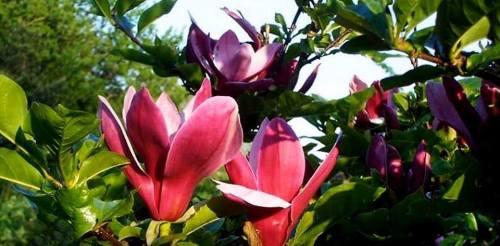 flori primavara 3
